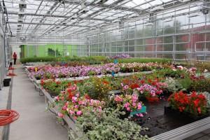 lilleline kasvuhoone